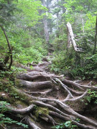 結構険しい登山道.jpg